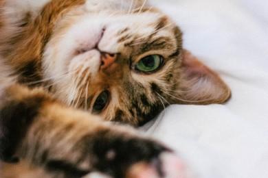 Kačių skiepai, vakcinacija: ką svarbu žinoti kiekvienam šeimininkui?