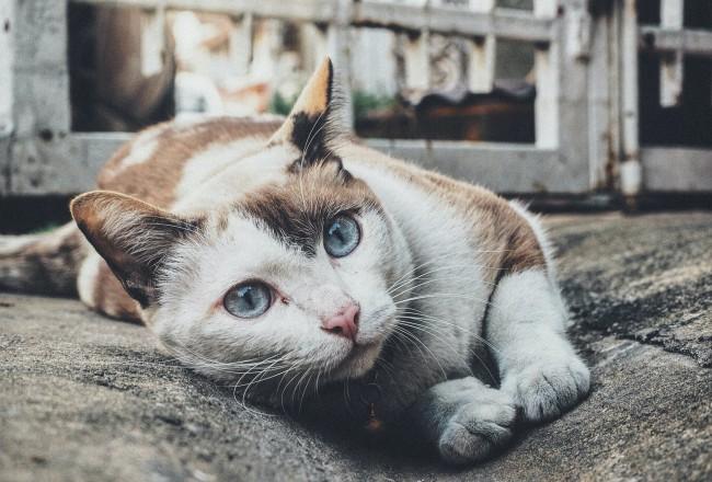 Katinų sterilizacija, kastracija