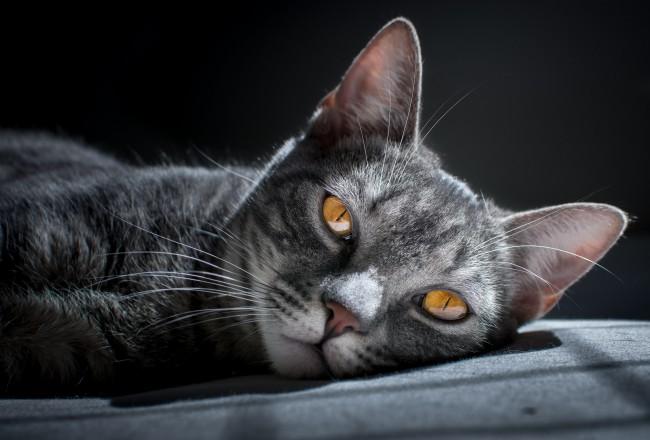 Katės užmigdymas (eutanazija)