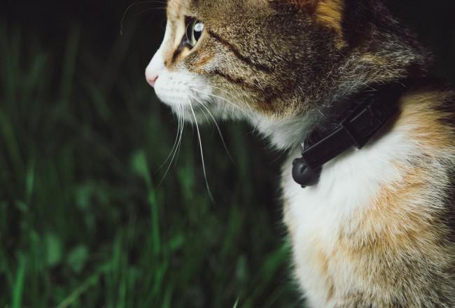 Kačių blusos